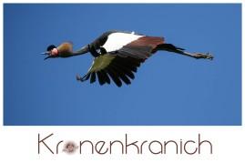 Logo 2016_07_26 Vogelpark Walsrode SO6A7880